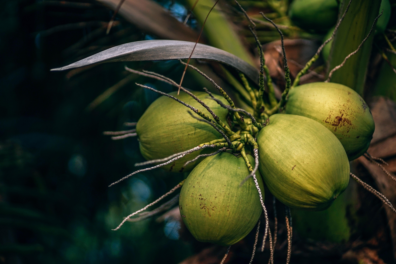 La noix de coco en Ayurvéda